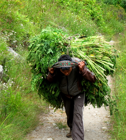 man carrying grass