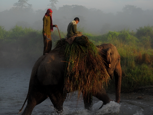 elephant grass crossing rive 2